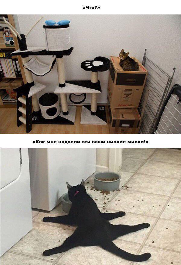 кошачья логика картинка
