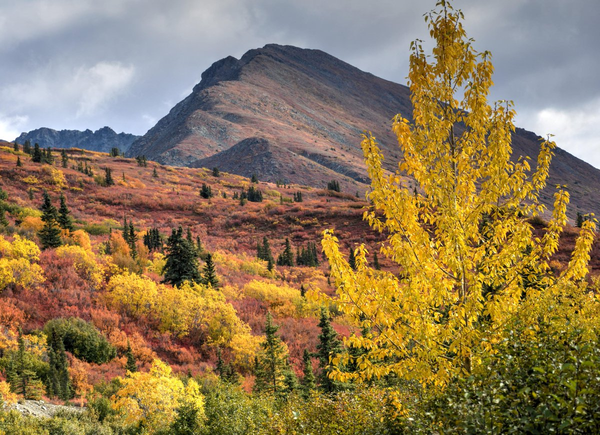 Autumn in Alaska http://t.co/vrk4e8vHUr