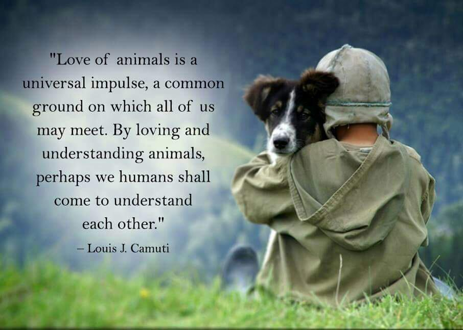Love Animals Quotes Best A Devoted Yogi On Twitter Love Of Animals Quotes Quote Http