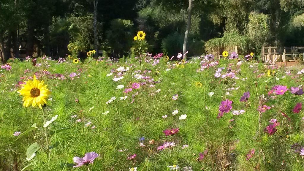 RT valhor_eqdv RT CommUniqueNet: C'est la Sainte Fleur ! Bonne journée ! #battleflowers … http://t.co/M5RRZLtiLH