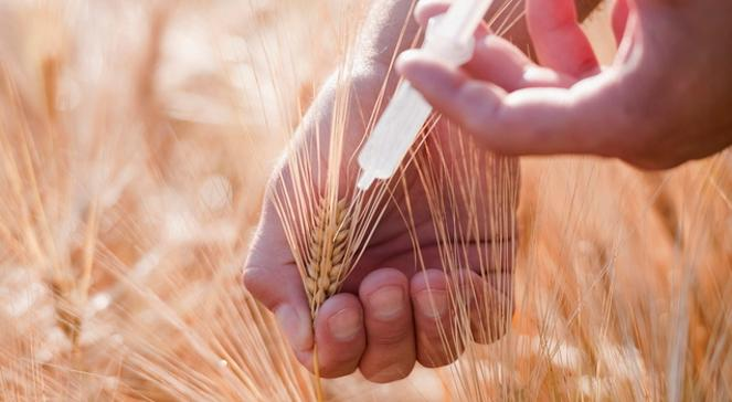 Genetiği Değiştirilmiş Ürünleri Tüketiyoruz