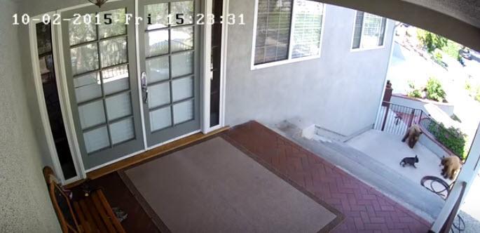 Tiny French bulldog takes on two bears who tresspass on her family property http://t.co/mQ65VzTUUN http://t.co/mDM7uMtm2H