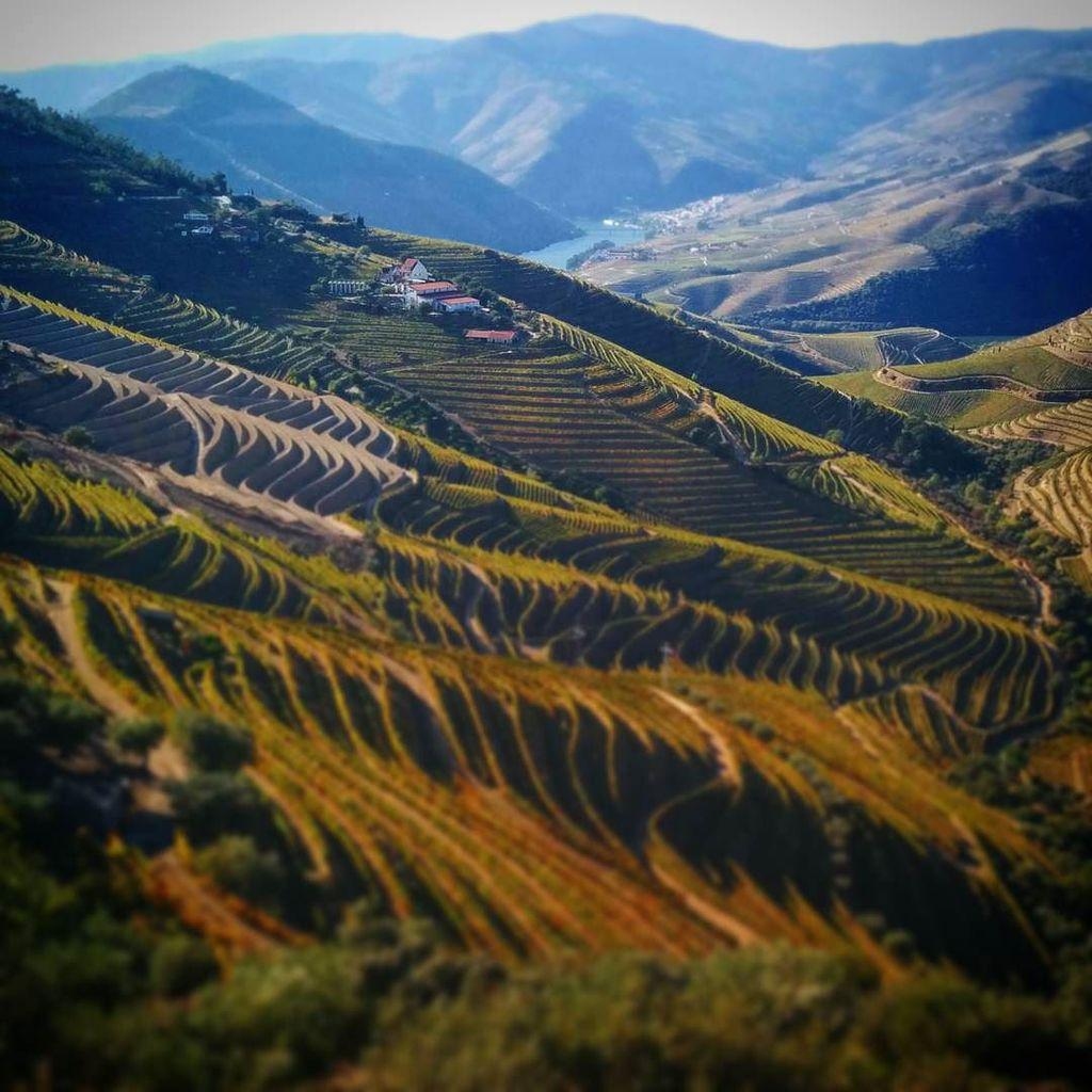 Douro valley vineyards, not for the faint of heart. #wine #extreme #portugal #portwine #travel #landscape #tourism http://t.co/OqM12H9dY9