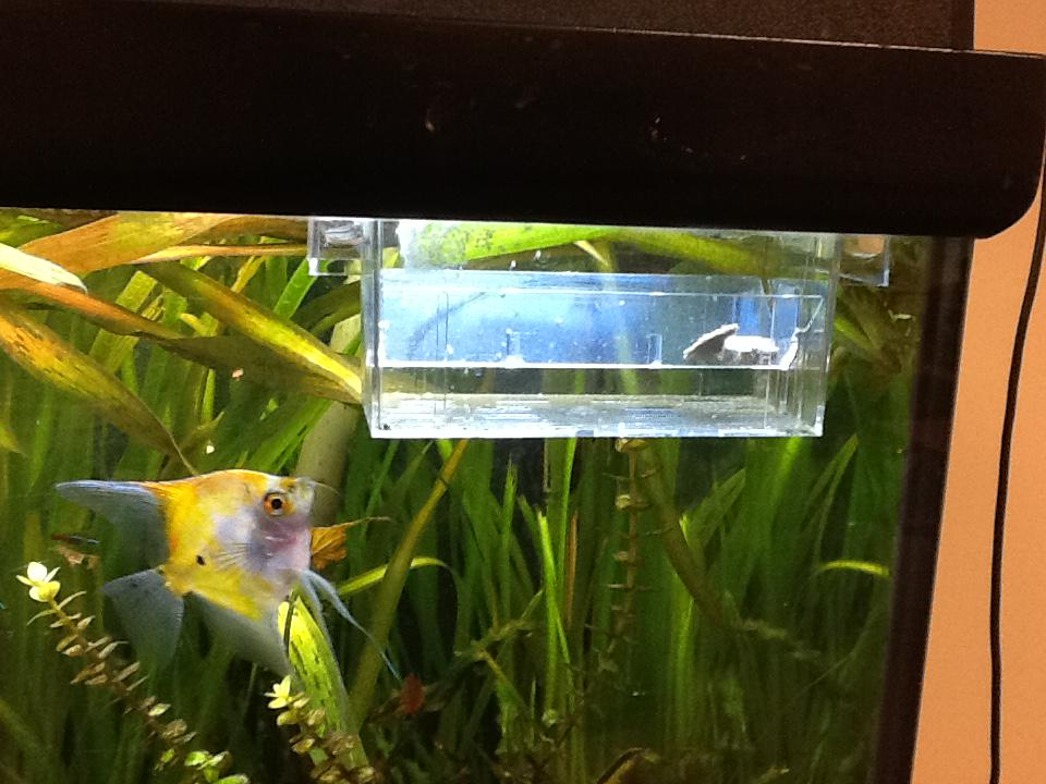 Tina Clindaniel On Twitter The Angel Fish Laid Eggs On A Plant Over The Weekend I Put Them In A Birthing Tank And Some Are Sprouting Fins Http T Co Niqnb7ejyo,Types Of Shrubs In New England