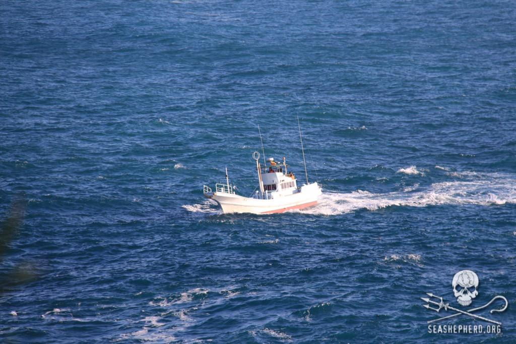 RT @CoveGuardians: 0805am: 12 empty hunting boats return to the harbor early due to rough seas. #tweet4taiji  #OpHenkaku http://t.co/QnrJc7…