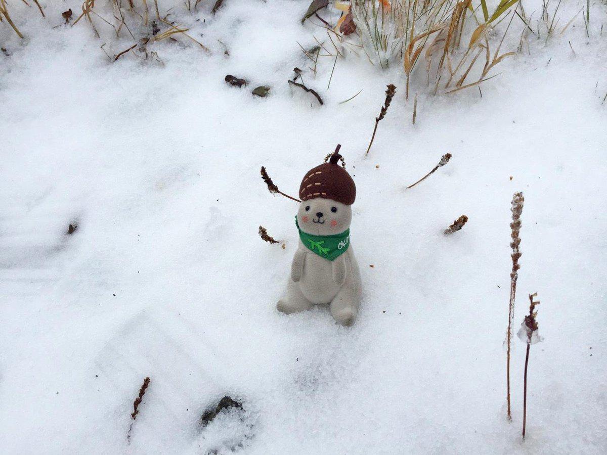 今日の雪にはおこみんもびっくり! #志賀高原 #横手山 #渋峠 http://t.co/hzV9EkMr6D
