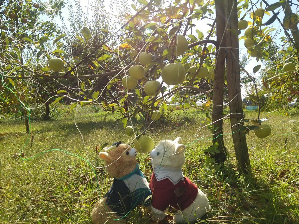 くりとあかいりんごとかきと、あおいりんごのしたで。