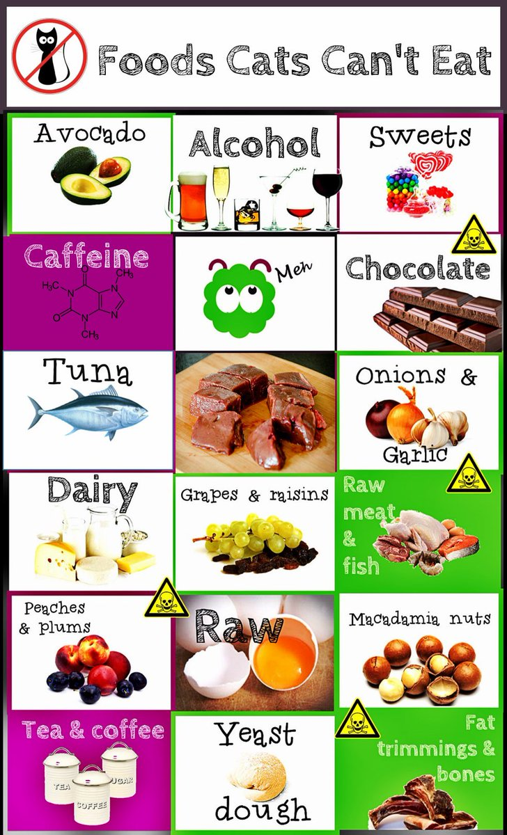 Renal Foods For Cats