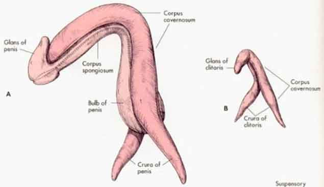 """vagina information on twitter: """"7 crazy amazing facts about the, Human body"""