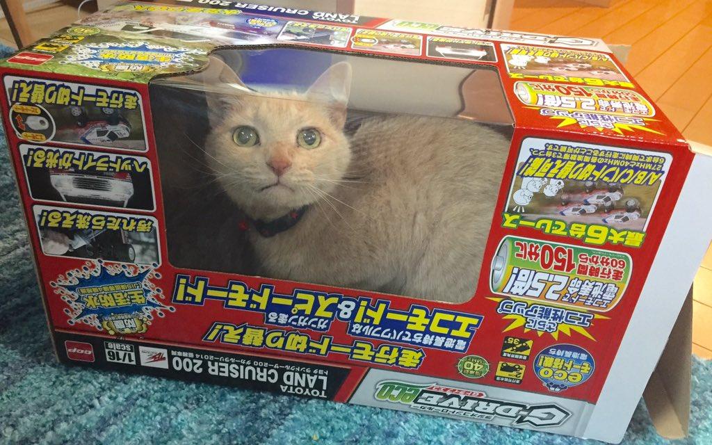 猫様がラジコンに! https://t.co/we8MCXIdYr
