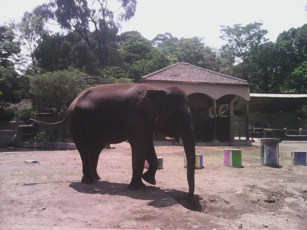 Liburan ke Kebun Binatang Gembira Loka Yogyakarta