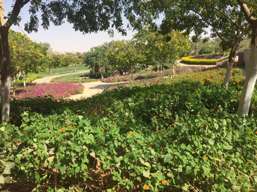 The beautiful garden scenery at the AUC New Campus #JRMC2202 #JRLWeb http://t.co/J0Nt1VOs3J
