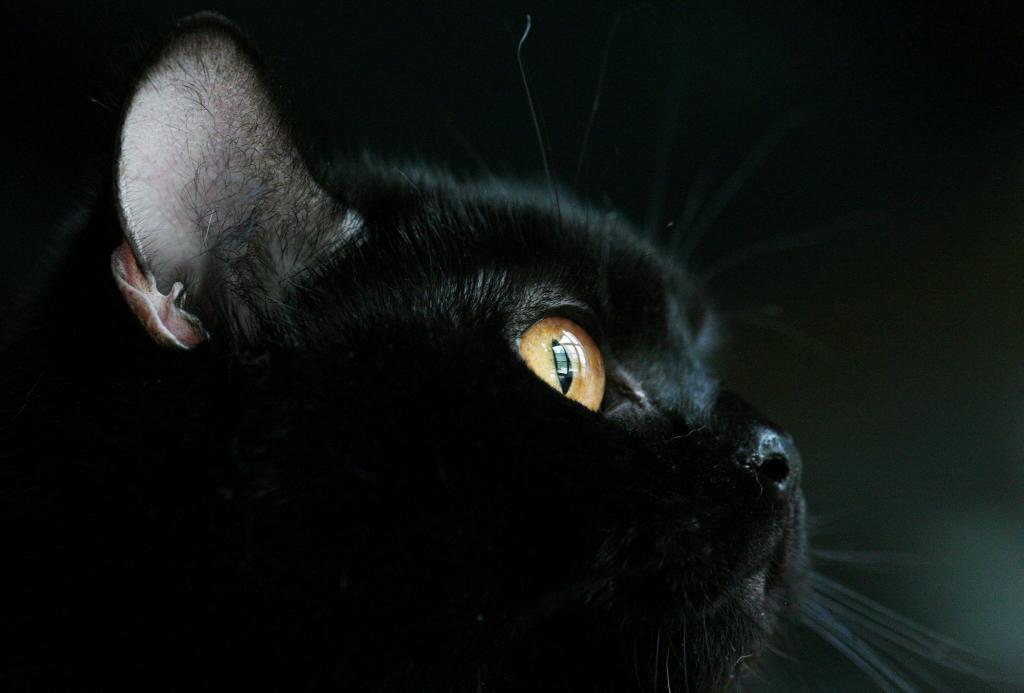 сайт, черные кошки в ночи картинки бросил