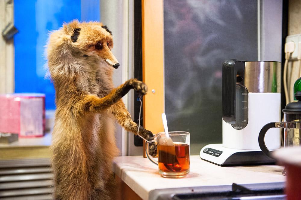 Картинка доброго утра лисы смешная с завтраком, пожеланием для мужчин