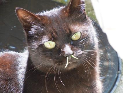 こんな衝撃的な猫写真が撮れるとは!!!!  これが昨日お話しました、 猫草を食べたとたんにくしゃみが出て、 猫草が鼻から出てしまった画像です。 勿論こののち、取ってあげました。 @kazusa0429  @g_kakera0920