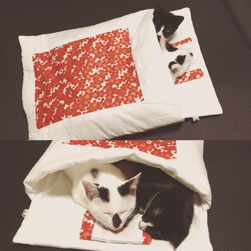 フェリシモの猫布団届いたんだけど可愛さしかない…可愛すぎて何時間でも見てられる…人間が眠れなくなる魔のお布団!!! #猫 #猫部 #cat