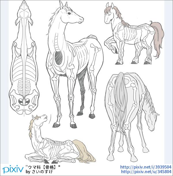 【講座】「馬」の描き方10選【骨格、ポージング、装飾】 馬の描き方、自然なポージングや装飾品を紹介したイラストを特集しました。 #pixivspotlight