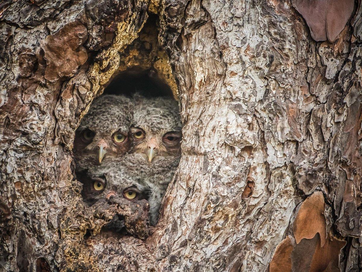 если гнезда в дуплах деревьев фото каждого характера, образа