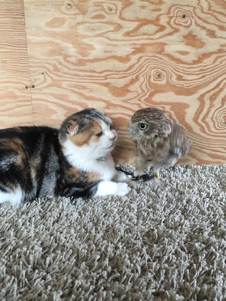 昨日の生き物にサンキュー!の猫スペシャルにフクマリもちょっと出てたみたいです。見たかったー pic.twitter.com/xGpt37Y0bF