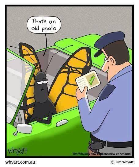 If an insect had a driver's license. #personifyme #imakesci http://t.co/1inLoHcMPA
