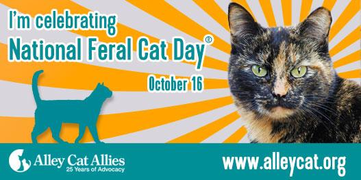 National #FeralCatDay is October 16. RT if you believe ALL cats deserve our love and protection! http://t.co/ZppWqxsxW8