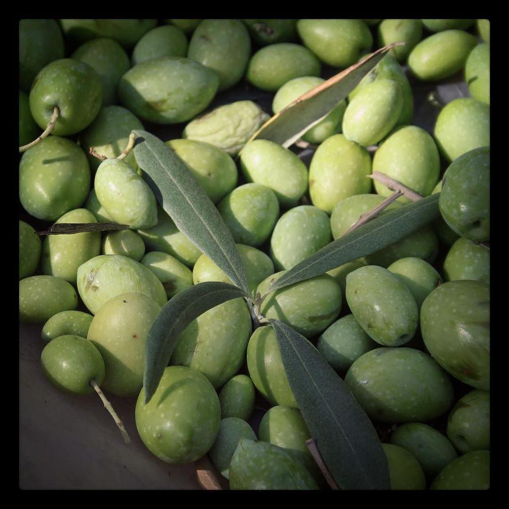 This will be next season's extra virgin olive oil #summer2016 #harvest #hideaway #villa #s… http://t.co/knqBAAkOJs