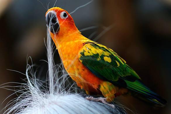 #Британец отрезал себе #уши, чтобы быть #похожим на #попугая http://t.co/jSuyazMGHh http://t.co/LaK7lEr47c