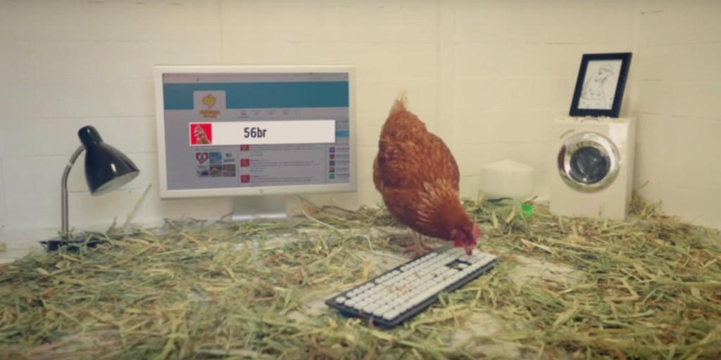 Poultry company has a live chicken running its Twitter. Now who else will admit this? http://t.co/oWYPhpLQKN http://t.co/JSRxqNQEea
