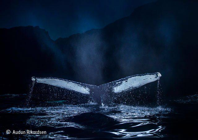 It never fails to delight; another stunning collection of images #WPY51 @NHM_London. A must see in its full glory http://t.co/V1c0ypTYzZ