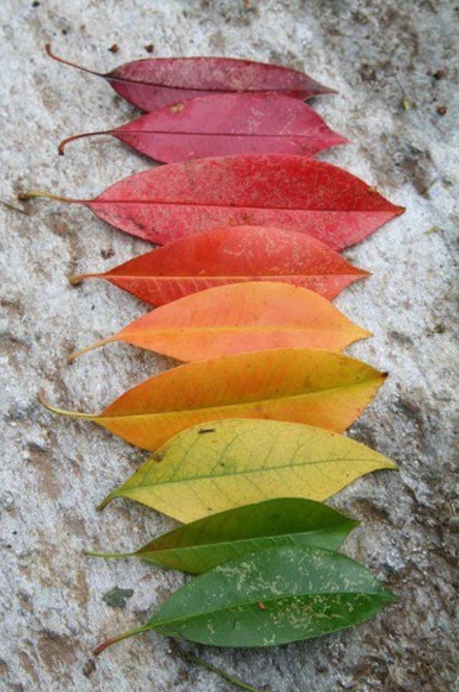 Autumn gradient http://t.co/TCH5b5gi0d