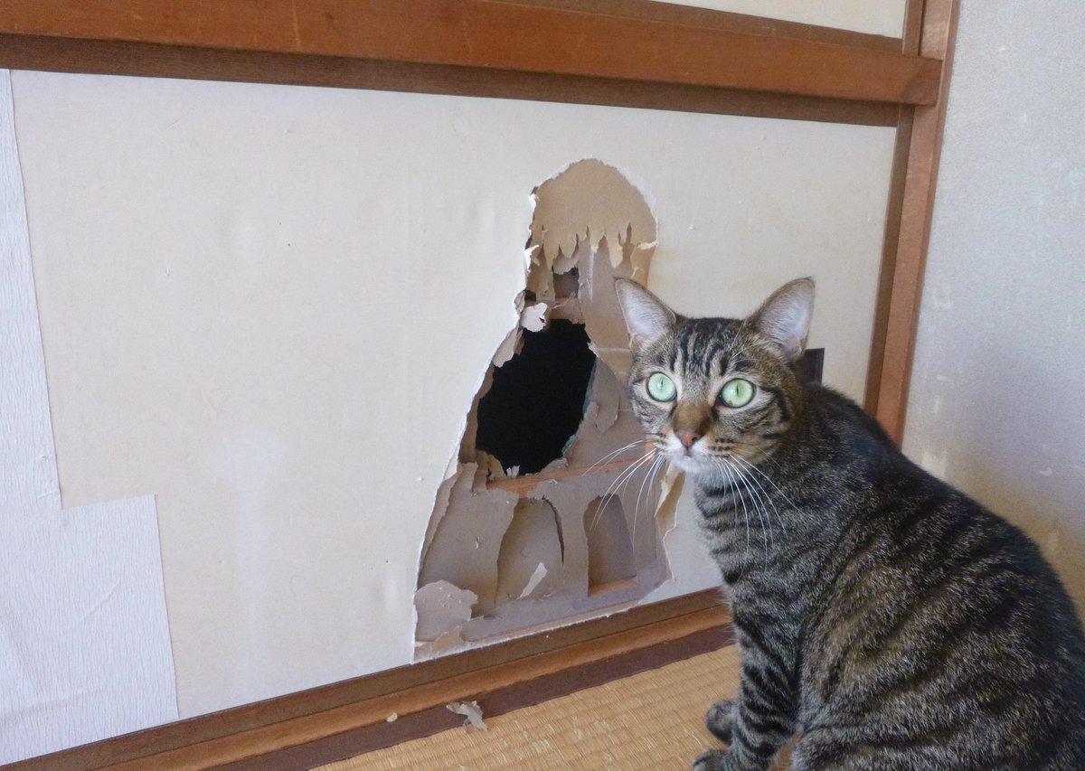 ステキなキャットドアを自作しました。 http://t.co/cfZOsNcxAK