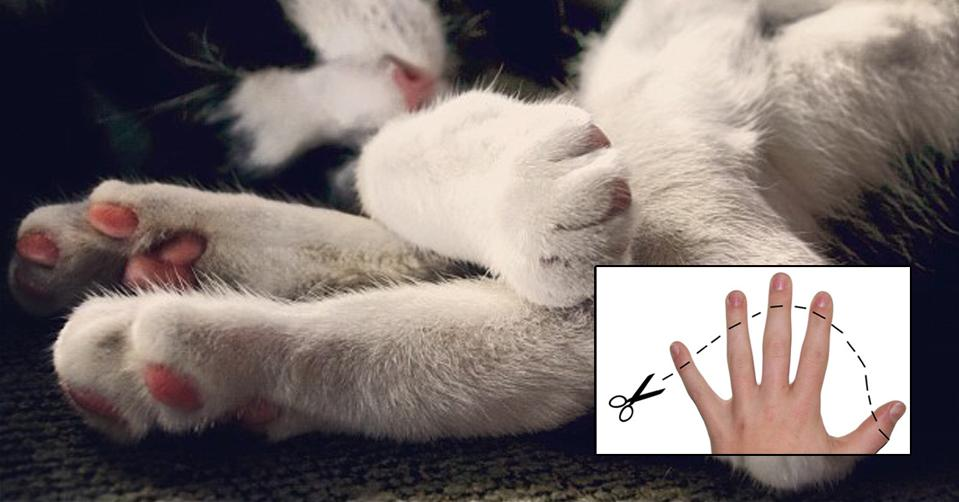 Declawed: Latest news, Breaking headlines and Top stories