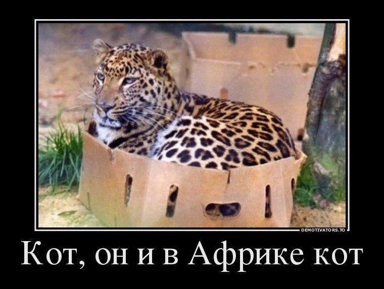 удобства демотиватор да я леопард большей