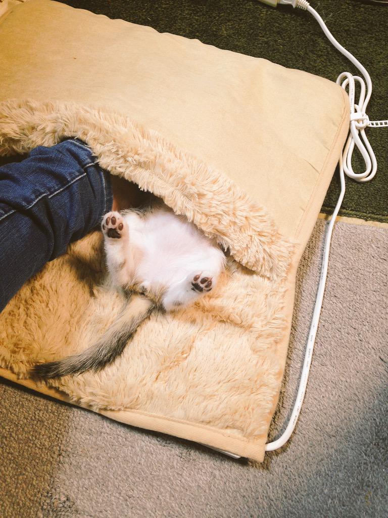 寒くなってきたので足用ホットカーペットを買ってきました。 pic.twitter.com/Z96XJtr5ih