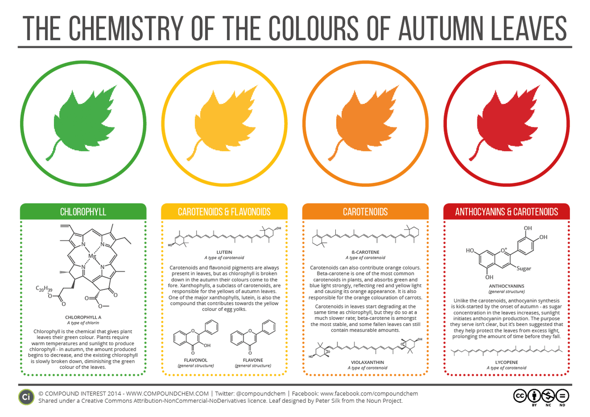 INFOGRAPHIC: The Chemistry of Autumn Colors #treechat https://t.co/aam5Hw4F5P