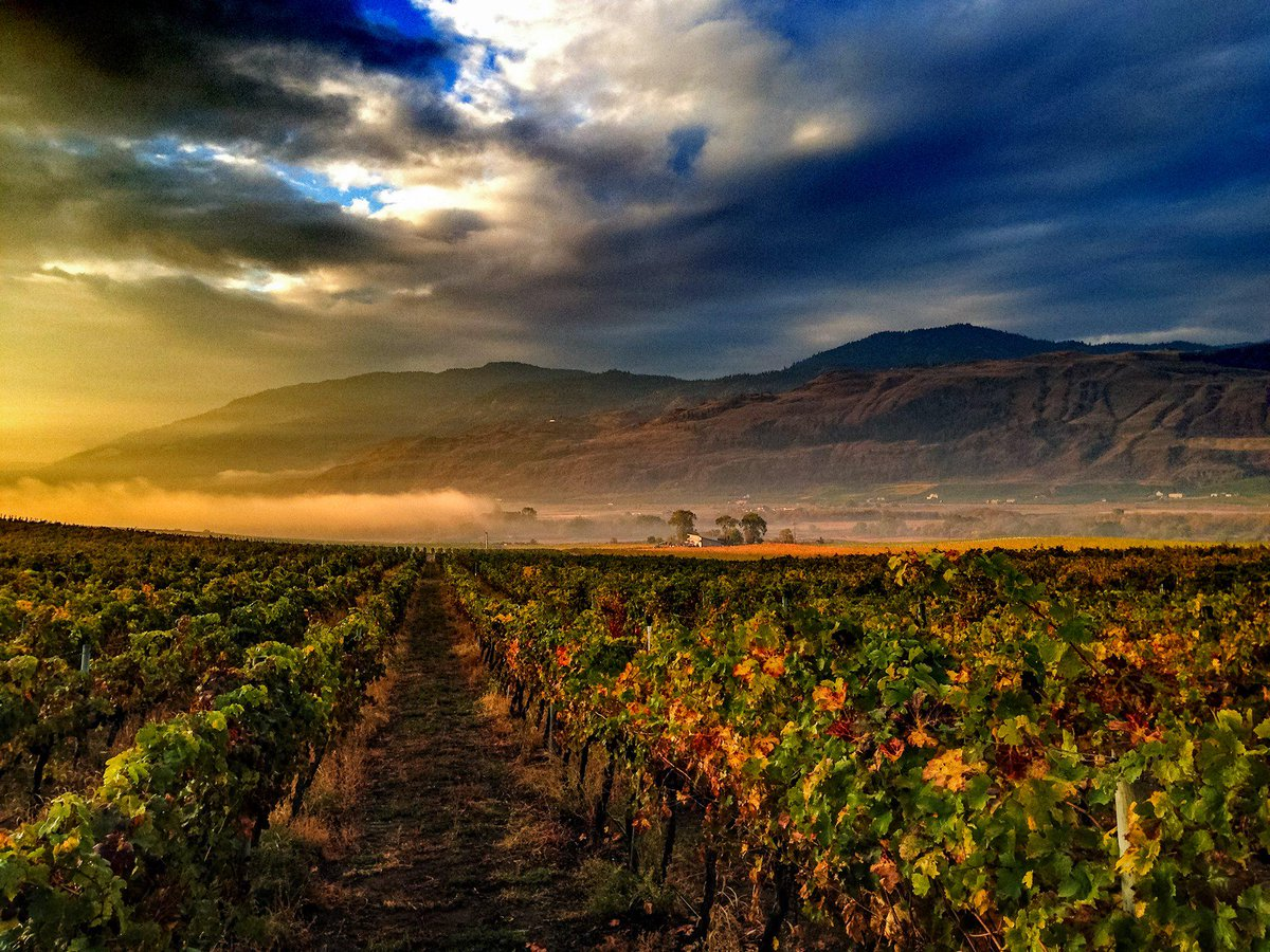 Early morning fog coming off the lake. Photo credit: Ian Mounsey at Tinhorn Creek Vineyards. #ExploreBC #Okanagan https://t.co/2BcHdSPDOW