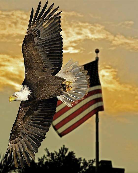 Happy #MilitaryMonday ...To all serving & those of you who have served in the past Thank you!! #gratitude #sot https://t.co/asKBm87cw1