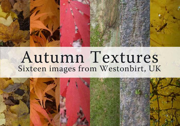 Free Autumn Leaves #Photoshop Textures https://t.co/JklTT8CyaS https://t.co/5T5liJZkan
