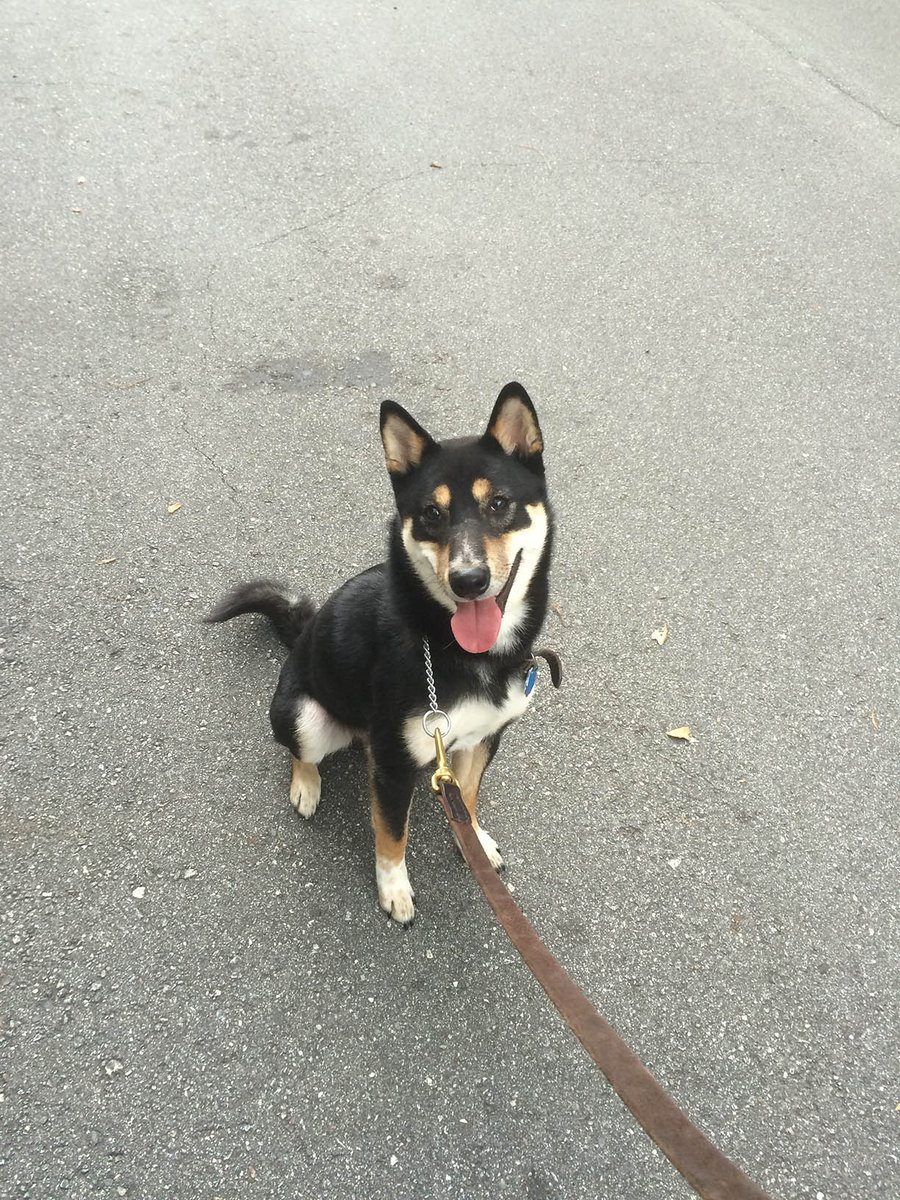 Akira the Shiba Inu needs a new home! RT's appreciated: https://t.co/0IqjsZQRyi https://t.co/Dv7YaZ2Dih
