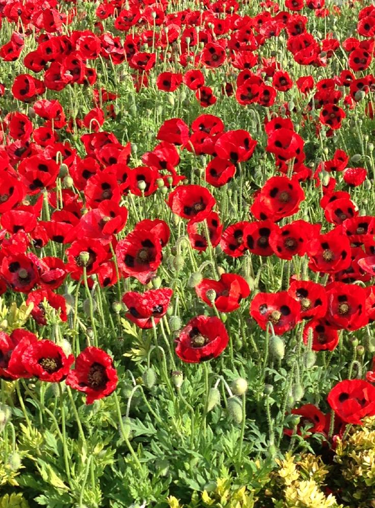 Wellington city council on twitter garden below queen victoria 1234 pm 2 nov 2015 from wellington city new zealand mightylinksfo