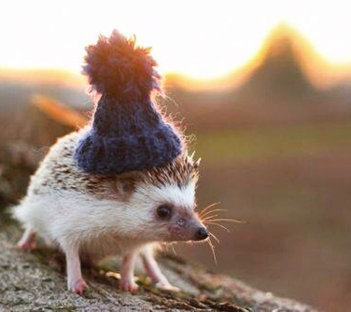 Congratulations. You survived Monday. Here's a tiny hedgehog in a tiny hat. https://t.co/RieYuxZAj3