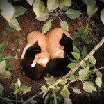 思わずミラクル‼と叫びたくなる猫の昼寝姿