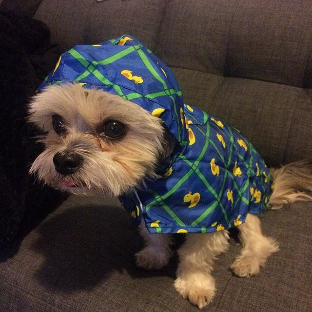 Bring on the rain. #Ready (Pic: Joanne) https://t.co/Vk8BtsN33N