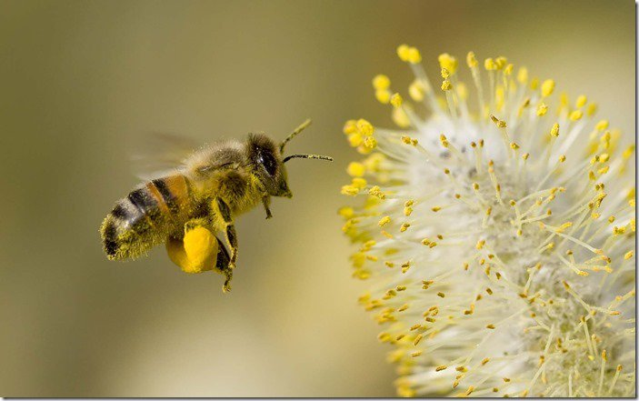 THE IMPORTANCE OF BEES https://t.co/w4FujktMY5 via @MyGardenSchool Online #Gardening Courses @BarefootBee #bees https://t.co/c3NLrpbnNH