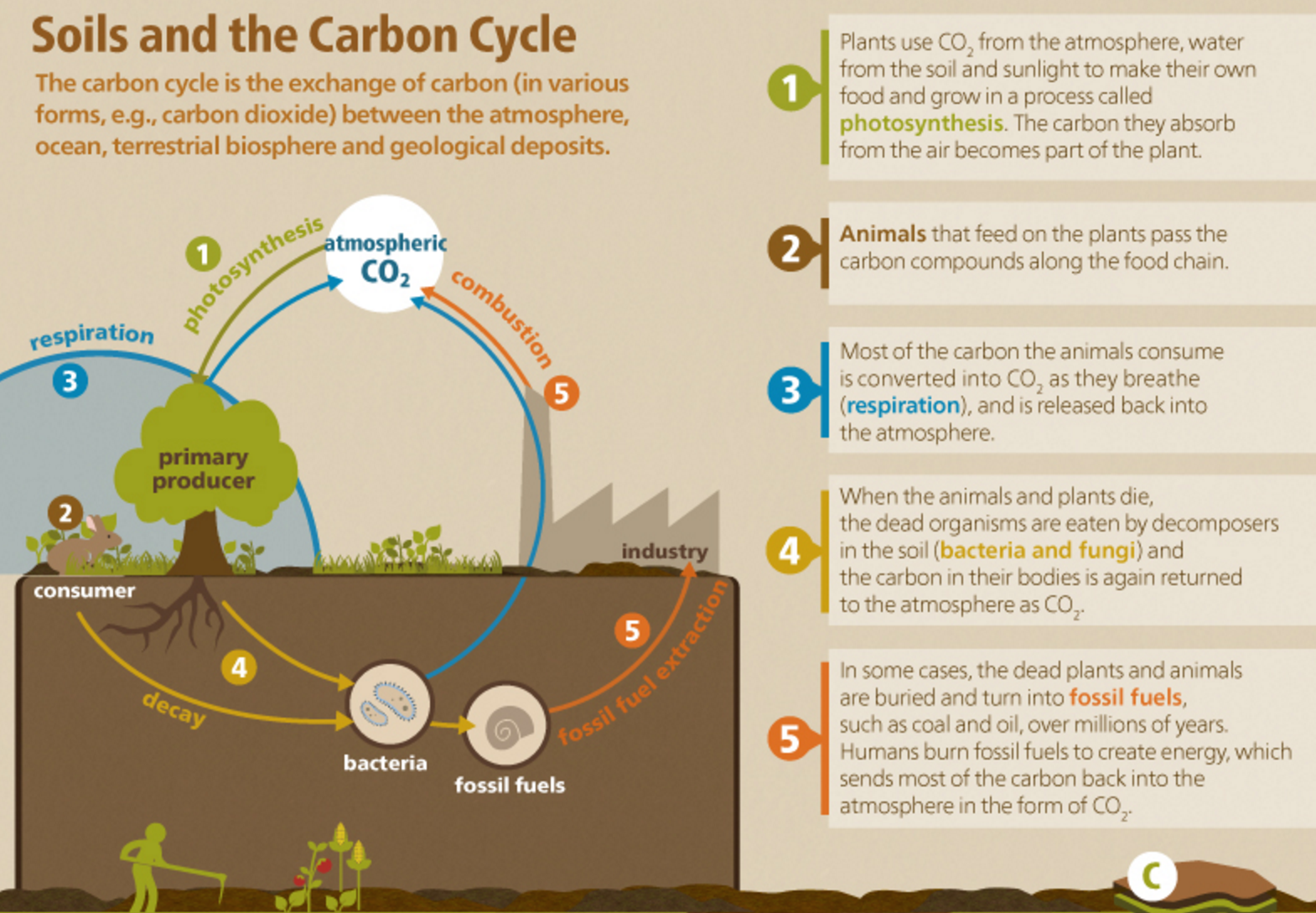 Soils, carbon cycle, and climate change