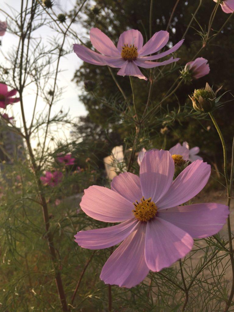 #まだ咲いてた #写真好きな人と繋がりたい  #雰囲気好きな人RTpic.twitter.com/EAhTXA3nwg