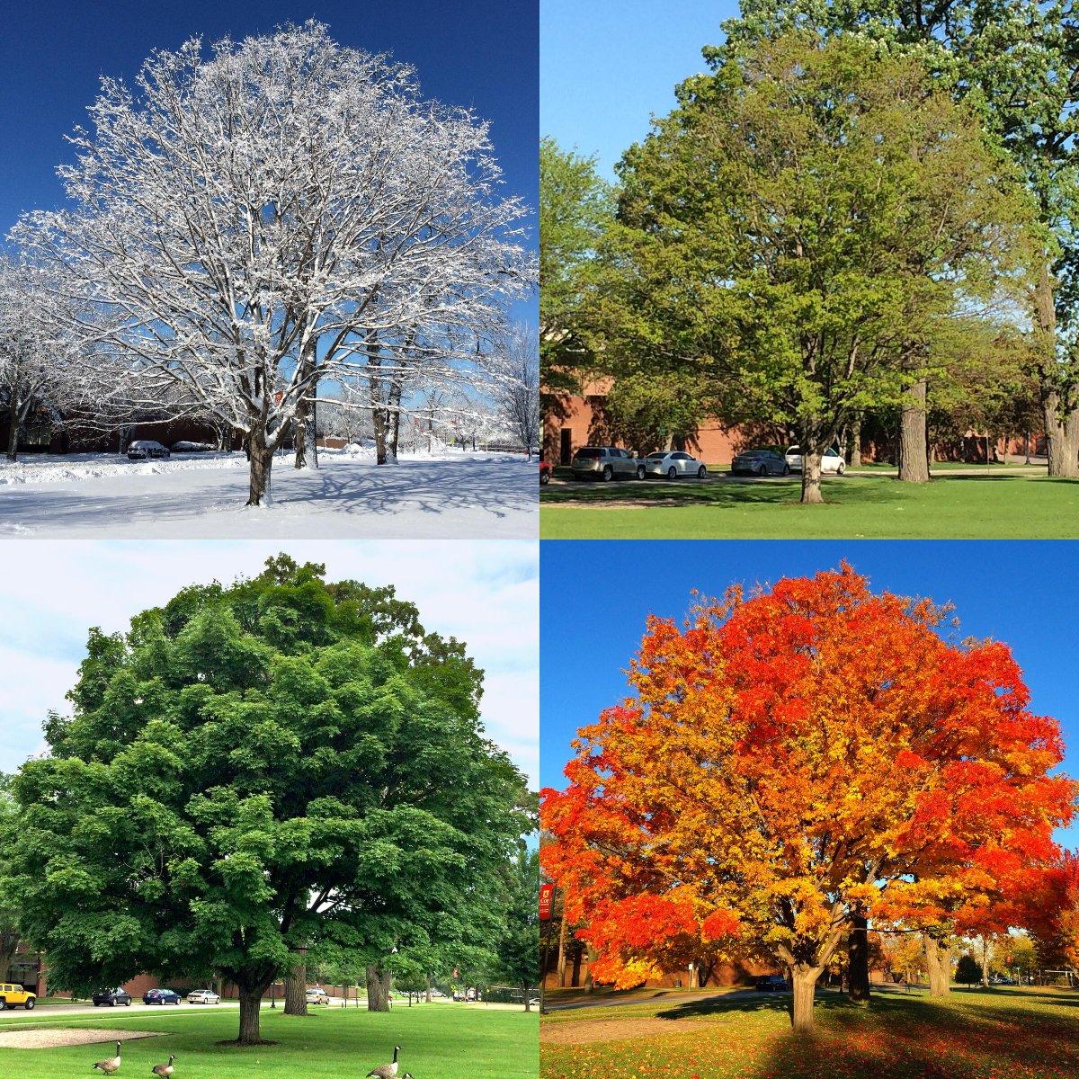 Картинки до пори року