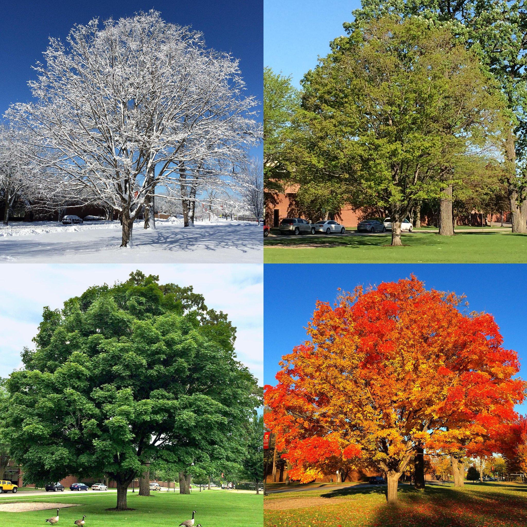 фотографии времен года для календаря рено, представленные