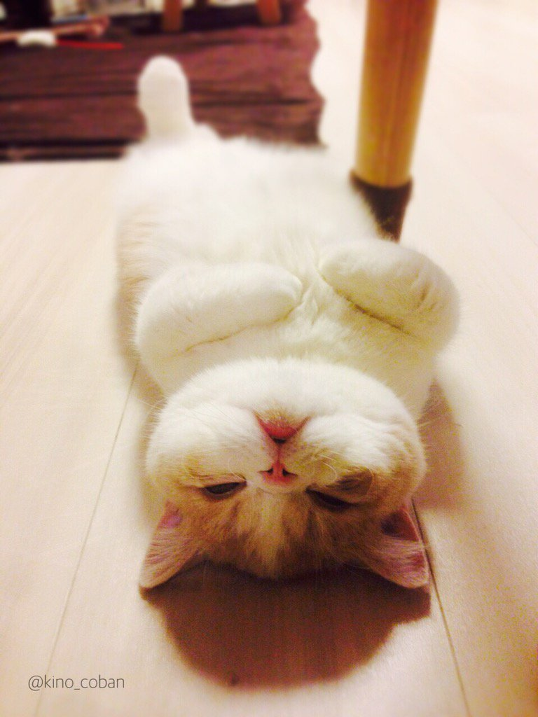 最近寒くなってきたので、去年生まれて初めて床暖房を経験したときの猫を置いておきます pic.twitter.com/ZbHgq3drJP