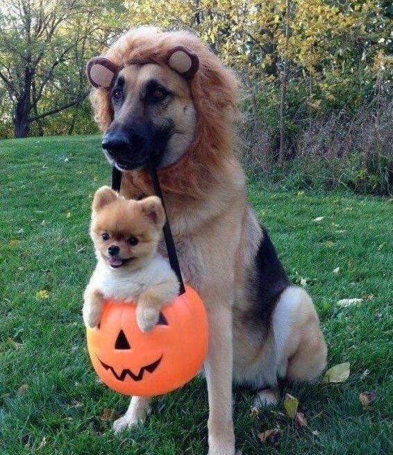 Halloween CSFR5GSUkAASKOw
